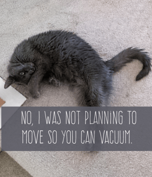 10 Life Lessons From a Small Gray Cat