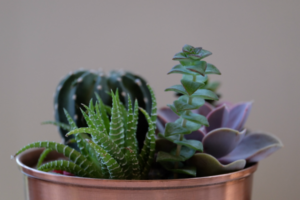 Make these 10 recycled DIY planters from commonly discarded household items. Check out this list before you buy planters from a store!