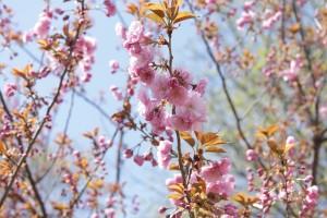 Spring Has Sprung Blog Giveaway @las930 #SHS316